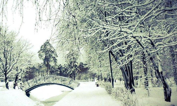 Парк Урицкого фото